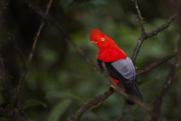 Se desarrollan proyectos turísticos por S/. 90 millones en áreas naturales protegidas